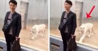 "Joven chino se ""salva"" de ser devorado por un tigre blanco"