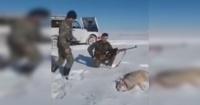 ¿Un zombie? Lobo se hizo el muerto para atacar a sus cazadores