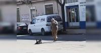 """""""Pobre, apenas se arrastra"""": el inesperado final del video de un perro """"atropellado"""" en Parral"""