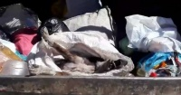 Indignación por perrito maltratado que fue lanzado al camión de la basura