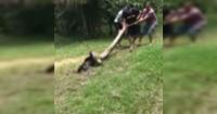 El dramático rescate de un perro que iba a ser engullido por una anaconda