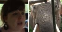 El aterrador momento en que un grupo de turistas es atacado por un elefante