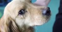 La desgarradora reacción de un perro al que salvaron de convertirse en comida