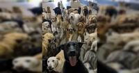 'Un montón de idiotas': la foto de los perros que se viraliza como 'la mejor selfie de todos los tiempos'