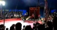 Captan el feroz ataque de un oso de circo a su domador en Rusia