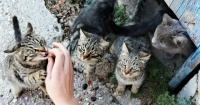 Hombre confesó que mató a más de mil gatos para hacer empanadas