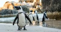 """El conmovedor video de dos pingüinos caminando """"de la mano"""" que enternece a las redes sociales"""