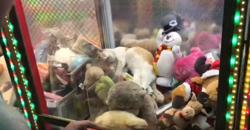 Sorprenden a un gato durmiendo dentro de una máquina de peluches ... 7f580fb2f19d