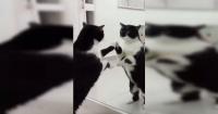 """El """"escalofriante"""" final del video del gato en el espejo que tiene a todos con la boca abierta"""