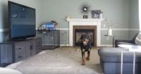 Esto es lo que hace tu perro cuando no hay nadie en casa