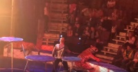 Impacto por tigresa que sufre convulsiones en pleno show en un circo