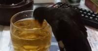 """Hombre emborrachó a su pájaro con cerveza y fue """"crucificado"""" en las redes sociales"""