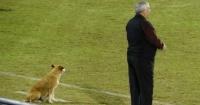 La tierna historia de la perrita que se convirtió en asistente del entrenador