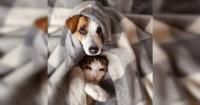 Estudio asegura que tu adicción al celular puede provocar depresión en tus mascotas