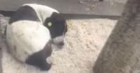 El emotivo encuentro de un hombre y su perro perdido después de tres años