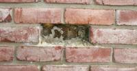 """Descubren """"aterrador"""" panal de abejas oculto entre las paredes de una casa"""