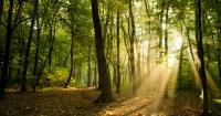 """El asombroso video que muestra el momento en que un bosque """"respira"""""""