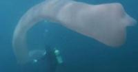 La extraña criatura marina de nueve metros de largo que apareció en Nueva Zelanda