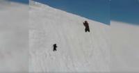 """La triste verdad detrás del video del """"oso perseverante"""" que escala una montaña nevada"""