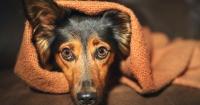 Crean casa para perros que anula el sonido de los fuegos artificiales