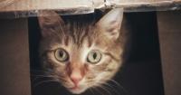 Gato viaja 1.200 kilómetros tras ser enviado por error en un paquete de mensajería
