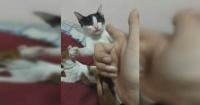 """Mujer le """"dispara"""" a su gato y la actuación del felino es digna de un premio Oscar"""