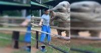 El tierno video en el que un elefante le exige a su cuidador que juegue con él