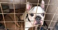 La emotiva historia de una mujer que se reunió con su perro 10 años después de que se perdiera