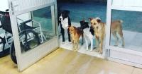 Fue hospitalizado de urgencia y sus fieles perros siguieron la ambulancia hasta la puerta del hospital