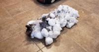 """El gato congelado que """"revivió"""" tras ser rescatado de la nieve"""