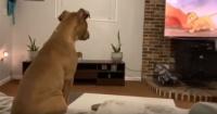 """La emotiva reacción de un perro al ver la muerte de Mufasa en """"El Rey León"""""""
