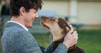 """Cine abre sus puertas para que espectadores vean con sus perros la película """"Mis huellas a casa"""""""