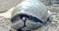 El increíble hallazgo de una tortuga gigante que se creía extinta desde hace 100 años