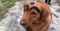 """Críticas a mujer que le pintó cejas a su perro para hacerlo """"más adorable"""""""