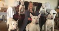 """""""Los perros o yo"""": mujer tuvo que decidir entre sus mascotas y su marido"""