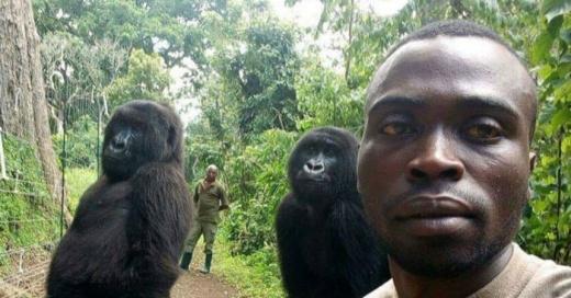 El parque donde los gorilas posan como humanos y que esconde una sangrienta historia