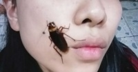 """""""Cockroach challenge"""": el nuevo reto viral que consiste en fotografiarse con cucarachas en la cara"""
